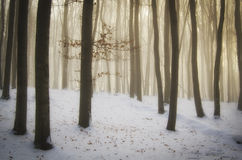 Magisk julskog med dimma och snö med mystiskt ljus royaltyfri foto