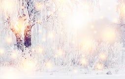 Magisk julvinterbakgrund Glänsande snöflingor och vinternatur med rimfrost på träd frostig vinter royaltyfria bilder