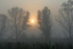 magisk morgon Arkivfoton