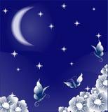 magisk natt Fotografering för Bildbyråer