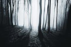 Magisk natt i skog royaltyfria foton