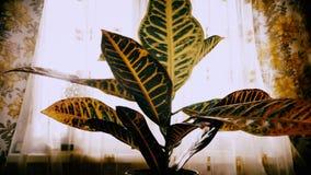 Magisk nypremiärpånyttfödelse av dricksvatten och att få för växtplanta växande upp efter lång torka Episk tidschackningsperiod royaltyfri foto