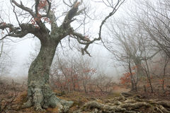 Magisk skog royaltyfria bilder