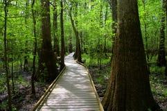Magisk skog Arkivfoto