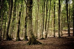 Magisk skog Royaltyfri Fotografi