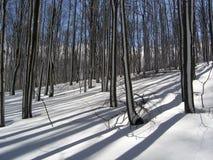 Magisk skog Royaltyfri Bild