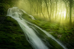 Magisk skog arkivbild
