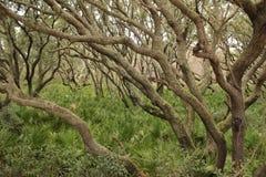 Magisk skog i höstsäsong Arkivbild
