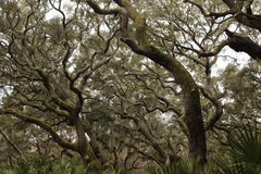 Magisk skog i höstsäsong Royaltyfri Foto
