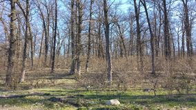 Magisk skog i höstsäsong Royaltyfri Fotografi