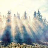 Magisk skog i myst med solstrålen Royaltyfria Foton
