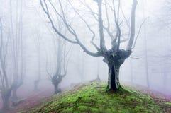 Magisk skog med dimma Arkivfoton
