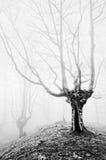 Magisk skog med dimma i svartvitt Royaltyfria Bilder
