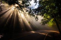 Magisk skog med ljusa strålar arkivbild