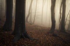 Magisk skog med mystisk dimma i höst Arkivfoton