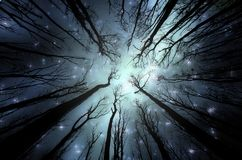 Magisk skog med stjärnor på himlen arkivbild