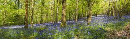 Magisk skog och lösa blåklockablommor arkivbild