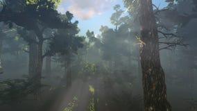 Magisk skogsol som glimmar till och med lövverkspårning stock illustrationer