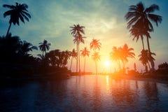 Magisk solnedgång på en tropisk strand med konturer av palmträd Natur Arkivfoto