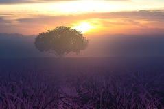Magisk soluppgång för abstrakt natur med trädbakgrund Royaltyfria Foton