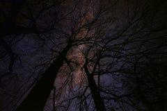 Magisk stjärnklar felik natt Arkivfoton