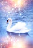 magisk swan Arkivfoto