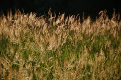 Magisk timme i ett gräs- fält Royaltyfria Bilder