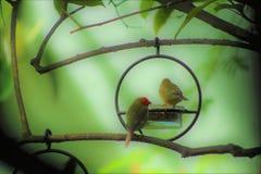 Magisk trädgård och Parrotfinches royaltyfria bilder