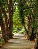 Magisk trädgränd Royaltyfria Bilder