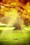 magisk tree Arkivfoton