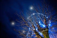 Magisk tree Arkivbilder
