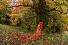 Magisk tree Fotografering för Bildbyråer