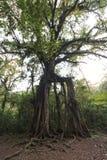 Magisk tree Arkivbild