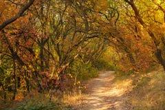 Magisk väg i en höstskog Arkivfoton
