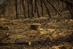 Magisk vårskog Arkivfoto