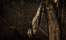 Magisk vårskog Arkivbild