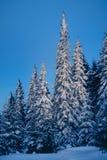Magisk vinterskog som täckas av snö på soluppgång Arkivfoton