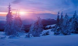 Magisk vinterskog som täckas på solnedgången Arkivbild