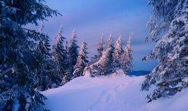 Magisk vinterskog som täckas på solnedgången Arkivfoto