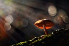 magiska champinjoner Arkivbild