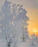 Magiska färger av vinteraftonen. Arkivbild