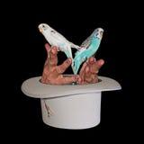 magiska fågelhänder Royaltyfri Foto