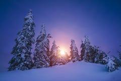 Magiska granträd som täckas av insnöade berg Royaltyfria Foton