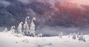 Magiska granträd som täckas av insnöade berg Arkivbilder