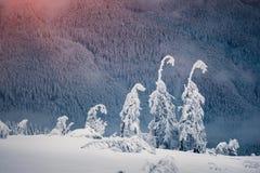 Magiska granträd som täckas av insnöade berg Arkivbild