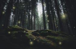 Magiska ljus sörjer in trädskogen royaltyfria foton