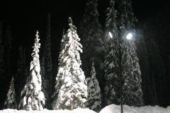 magiska snowfall Royaltyfria Bilder
