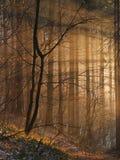 magiska sunbeams Royaltyfri Bild