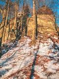 Magiska träd i snöig strålar för skogremsasol i morgonen fördunklar arkivfoto