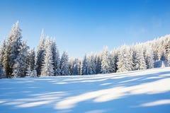 Magiska träd som täckas med vit snö Arkivbild